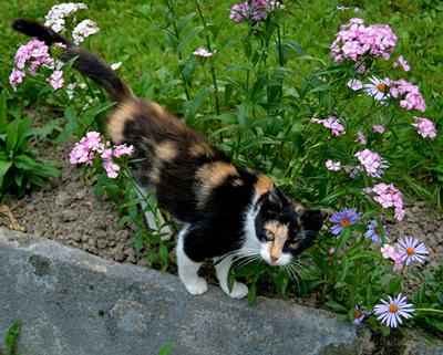 Velká kořist mokrá kočička